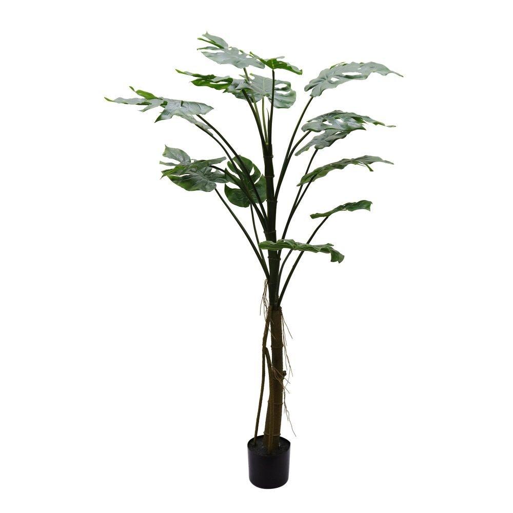 52596 Monstera Plant 157cm H - Simplife